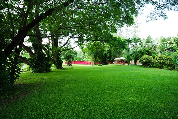 a-green-lawn-in-the-park-summer-day-summer-landscape_low