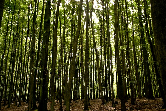 forest_zylOcBcd_SMALL-1.jpg