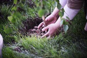 hands-planting-a-tree_low