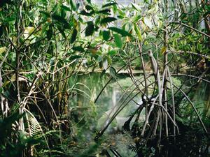 mangrove-forest-natural-resources-2